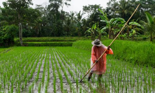Food Sovereignty in the Perspectives of Indigenous Religion